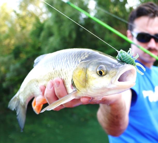 釣り、始めました