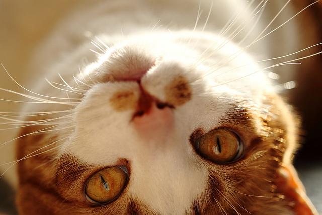 猫の真似したら息子が優しくなった イヤイヤ期対策に面白い接し方
