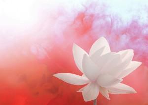 小林麻央さんの乳がんに思うこと 若年の癌 検診より大事なのは【予防】 日々何を積み重ねている?