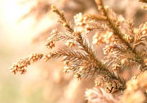 良質なアブラ生活で花粉症が軽度になった夫と娘 花粉症を治す 改善への近道 免疫力アップ