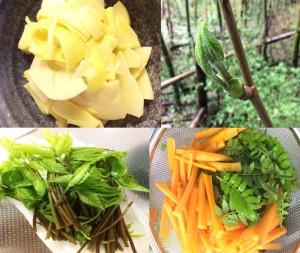 山で春の山菜を収穫 こしあぶらの天ぷら 山椒のかき揚げ タケノコの刺身